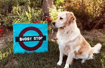 BUDDY STOP -- Instant Help FROM Students TO Students