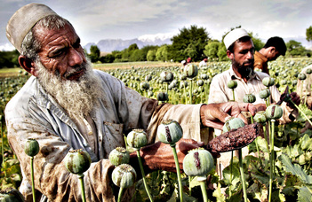 Kábítószerek a modern Afganisztánban